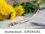 dandelion root  with dandelion... | Shutterstock . vector #639246241