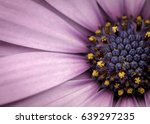 macro flower | Shutterstock . vector #639297235