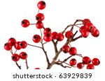 Hawthorn On A White Background