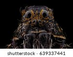 Portrait Of A Wolf Spider...