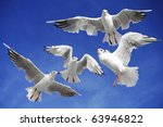 A Seagulls Soaring In The Blue...