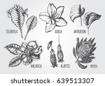 ink hand drawn set of tropical... | Shutterstock .eps vector #639513307