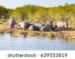 herd of hippos sleeping along... | Shutterstock . vector #639553819