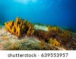 Mediterranean Sponge.