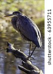 beautiful great blue heron bird ... | Shutterstock . vector #63955711