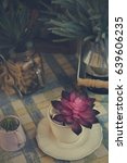 Small photo of Small succulent plant aeonium in white cup on table