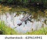 Alligator In Pond In Florida...