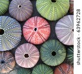 Variety Of Colorful Sea Urchin...