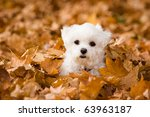 Stock photo alle in the leaves 63963187
