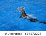 dolphin in the water  dolphin... | Shutterstock . vector #639672229