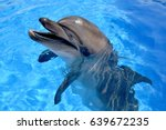 dolphin in the water  dolphin...   Shutterstock . vector #639672235