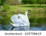 Small photo of Lake with a white swan