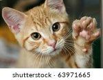 Stock photo cute ginger kitten waving 63971665