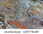 Small photo of Pine bark background or texture
