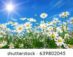 field of daisies  blue sky and... | Shutterstock . vector #639802045