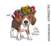 portrait of a puppy beagle in a ... | Shutterstock .eps vector #639802795