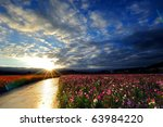 Flower Field With Blue Sky In...