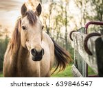Stock photo horse portrait at sunset 639846547