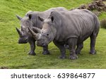 Two White Rhino's Side By Side...