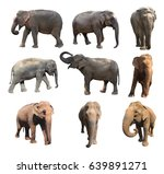 the various postures of the... | Shutterstock . vector #639891271