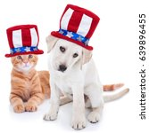 Small photo of Patriotic happy American pet kitten cat and puppy dog animals wearing red white and blue Uncle Sam flag hat for July 4th, fourth, 4, USA election vote, Memorial, Independence, Labor and Presidents Day