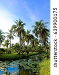 Small photo of crone of a palm tree with coconut