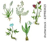 watercolor drawing herbs ... | Shutterstock . vector #639983425