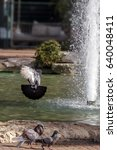 Small photo of City pigeons in flight black abd withe
