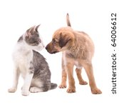 Stock photo cute young kitten and puppy in a staring contest studio shot isolated on white 64006612