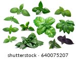 basil leaves  different... | Shutterstock . vector #640075207