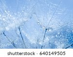 abstract dandelion flower seeds ... | Shutterstock . vector #640149505