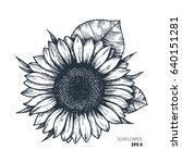sunflower vintage engraved... | Shutterstock .eps vector #640151281