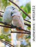 birds in love  pair of cockatoo ... | Shutterstock . vector #64016512