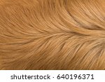 Macro Brown Dog Hair
