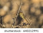 A Large Dragonfly Sits On A Dr...