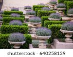 Pots Full Of Lavender In Rows....