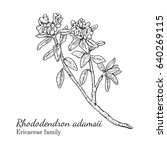 ink rhododendron adamsii herbal ... | Shutterstock .eps vector #640269115