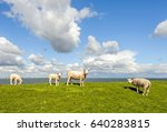 four sheep on a dike next to a...