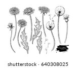 dandelion flower vector drawing ... | Shutterstock .eps vector #640308025