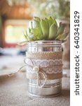 Succulent Plant In Silver Tin...