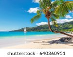palm tree on tropical beach in... | Shutterstock . vector #640360951