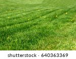 yellow dandelions on a shaved... | Shutterstock . vector #640363369