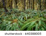 Lush Foilage at Quinault Rainforest in Olympic National Park