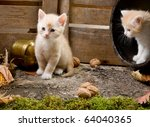 Stock photo two six weeks old red kittens exploring the garden 64040365