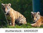 tiger cub | Shutterstock . vector #64043029