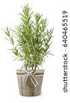 rosemary plant in vase isolated ... | Shutterstock . vector #640465519