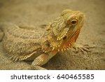 bearded dragon   lizard .... | Shutterstock . vector #640465585