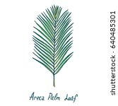 areca palm leaf  hand drawn... | Shutterstock .eps vector #640485301
