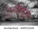 colorized single pink blossom...   Shutterstock . vector #640512634