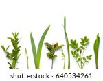 green plants isolated on white... | Shutterstock . vector #640534261